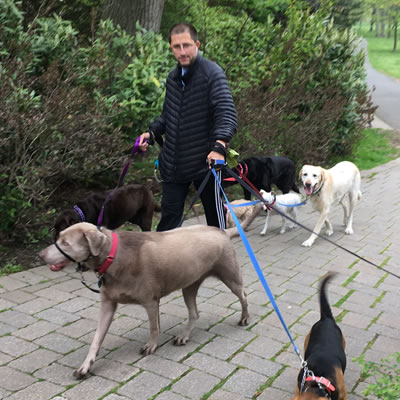 Dog walking is a popular park activity