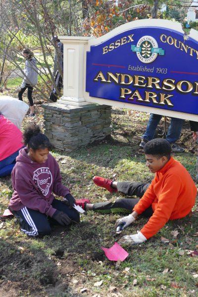Children planting tulip bulbs